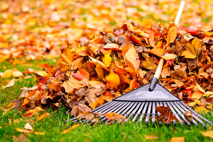 Intermediate word of the day rake wordreference word of the day a rake is a gardening tool long handled and with three or more teeth or tines used to gather leaves hay or grass or for smoothing the surface of the malvernweather Gallery